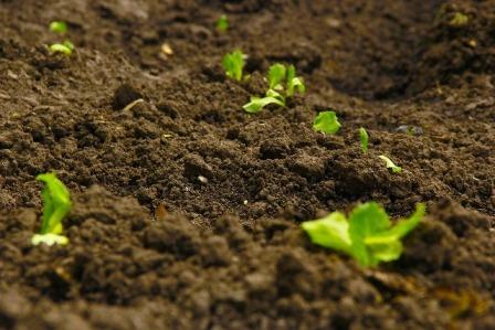 analisi di terreni agricoli