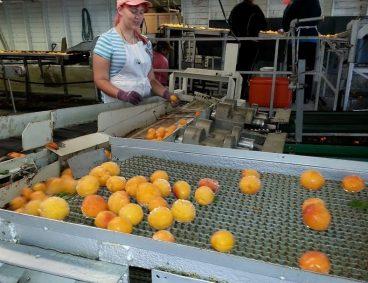 Autocontrollo e analisi di laboratorio nell'industria alimentare