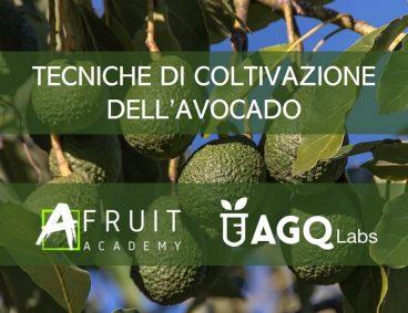 Corso di Tecniche di Coltivazione dell'Avocado