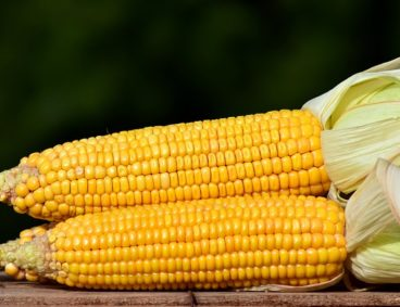 Monitoraggio Nutrizionale su Mais