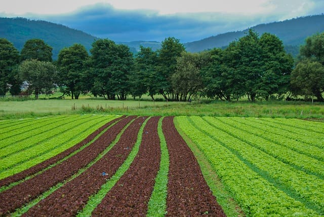 Ciclo degli elementi nutritivi e fertilità del suolo