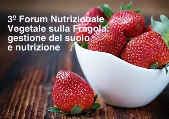 Qualità e sostenibilità nella coltura di fragole