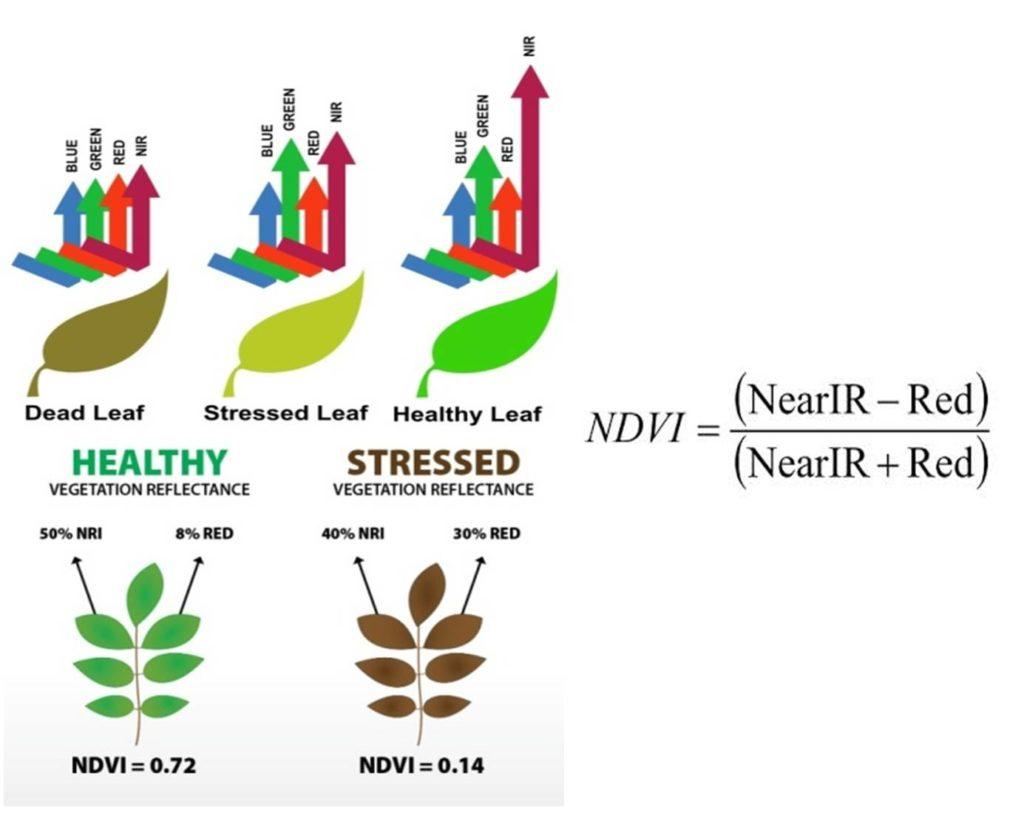 Funzionamento NDVI